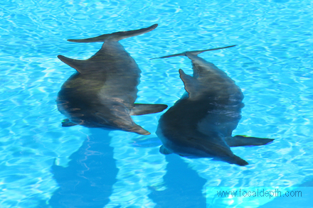 Wildlife - Two dolphins