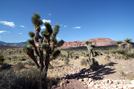 USA - Joshua Tree, Red Rock Canyon, Las Vegas