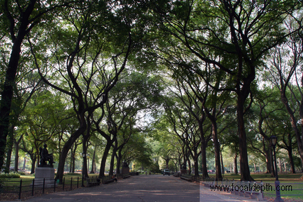 USA - The Mall and Literary Walk, Central Park, New York